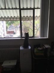 bean @ window